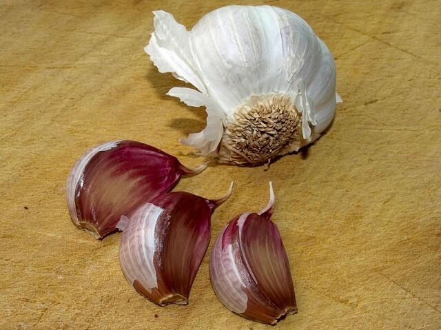 Usos medicinales del Ajo (Allium sativum).