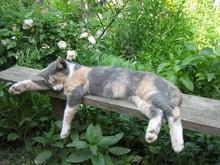 Gatitos dormido
