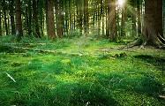 Bosque con ortigas.
