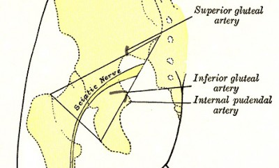 lamina del nervio caitico