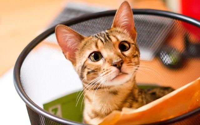 gato en una papelera de oficina